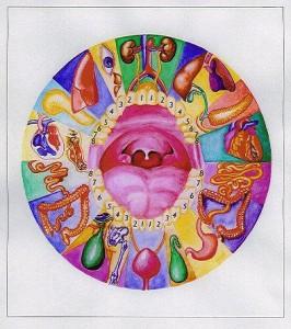 dr-adler-organo-diente